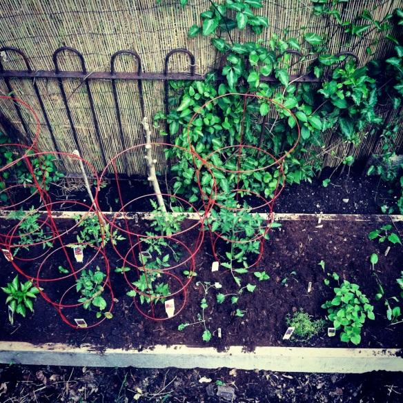 garden progress 5/13/2013